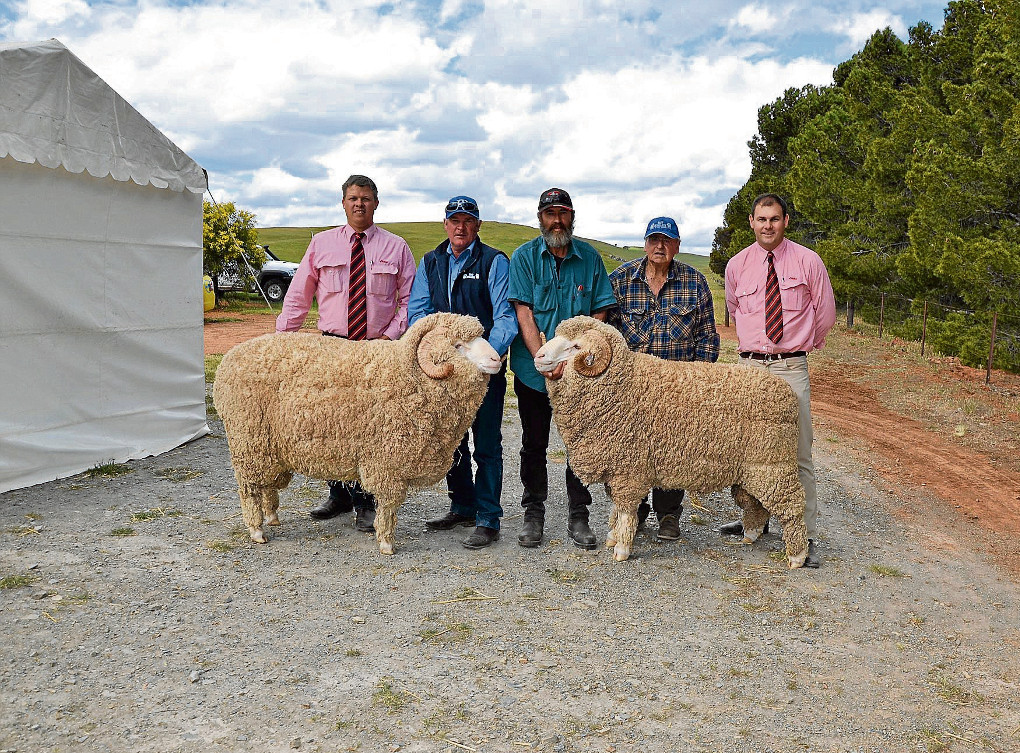 East Bungaree Stud Ram Sales